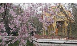 Archivinhalt:Asiatische Gartenkunst im Westpark